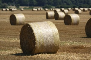 V libovolném segmentu Rusko má potenciál. Má obrovský potenciál v zemědělství.